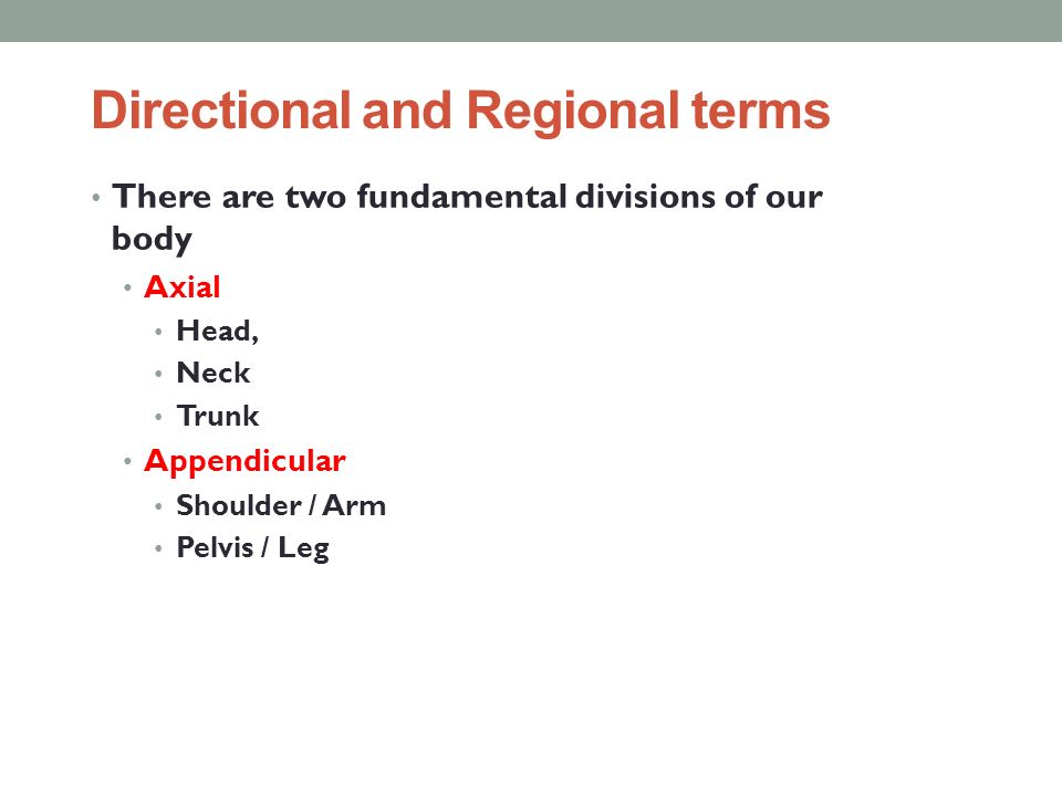 Directional and Regional terms There are two fundamental divisions of our body Axial Head, Neck Trunk Appendicular Shoulder / Arm Pelvis / Leg