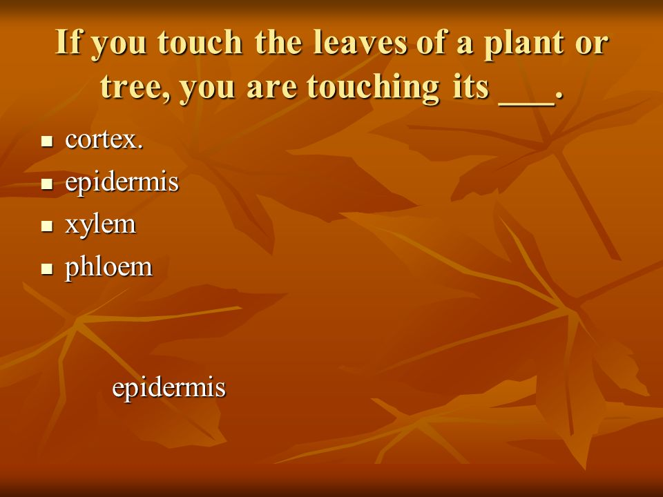 If you touch the leaves of a plant or tree, you are touching its ___.