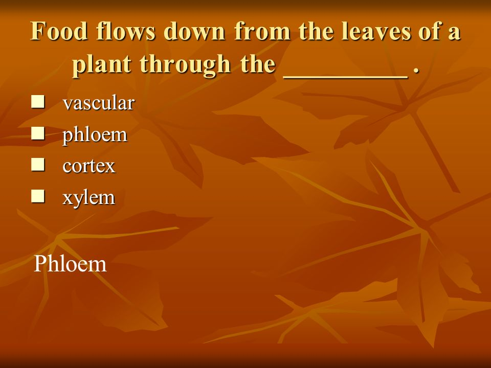 Food flows down from the leaves of a plant through the _________.