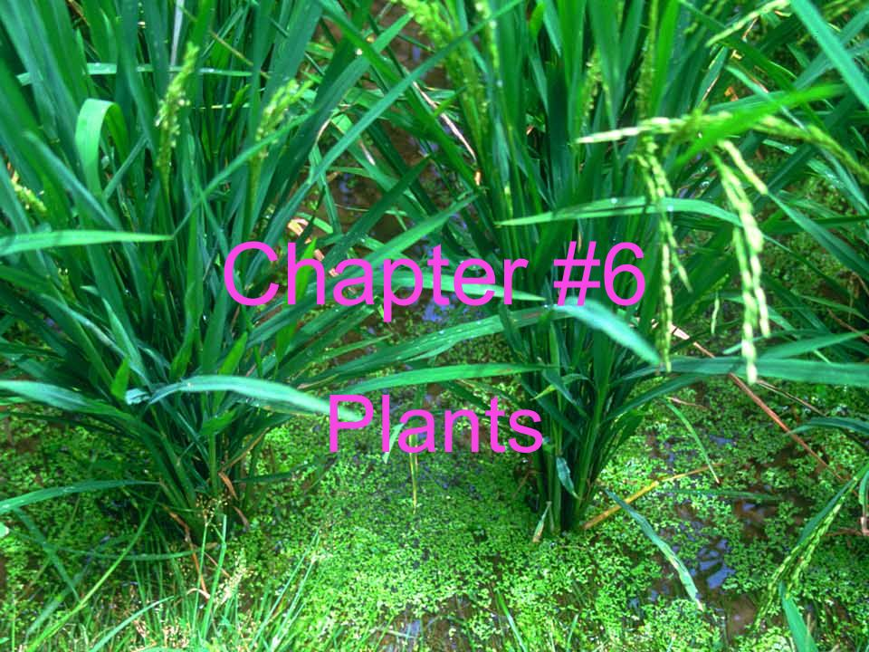 Chapter #6 Plants