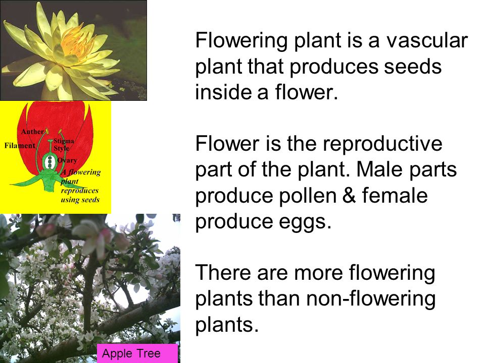Flowering plant is a vascular plant that produces seeds inside a flower.