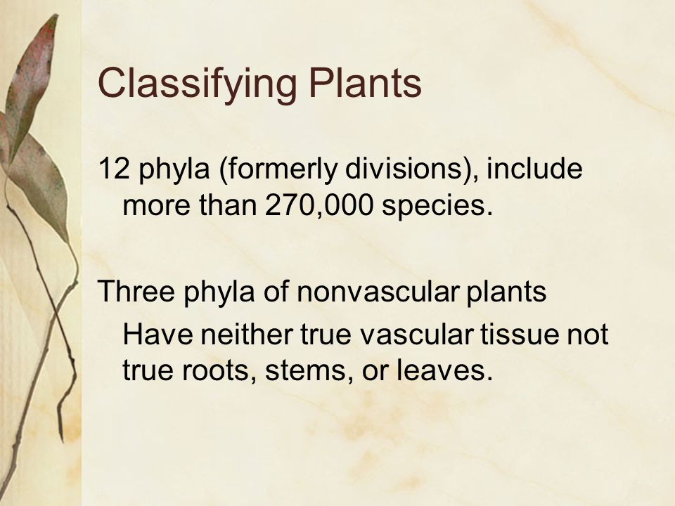 Classifying Plants 12 phyla (formerly divisions), include more than 270,000 species.