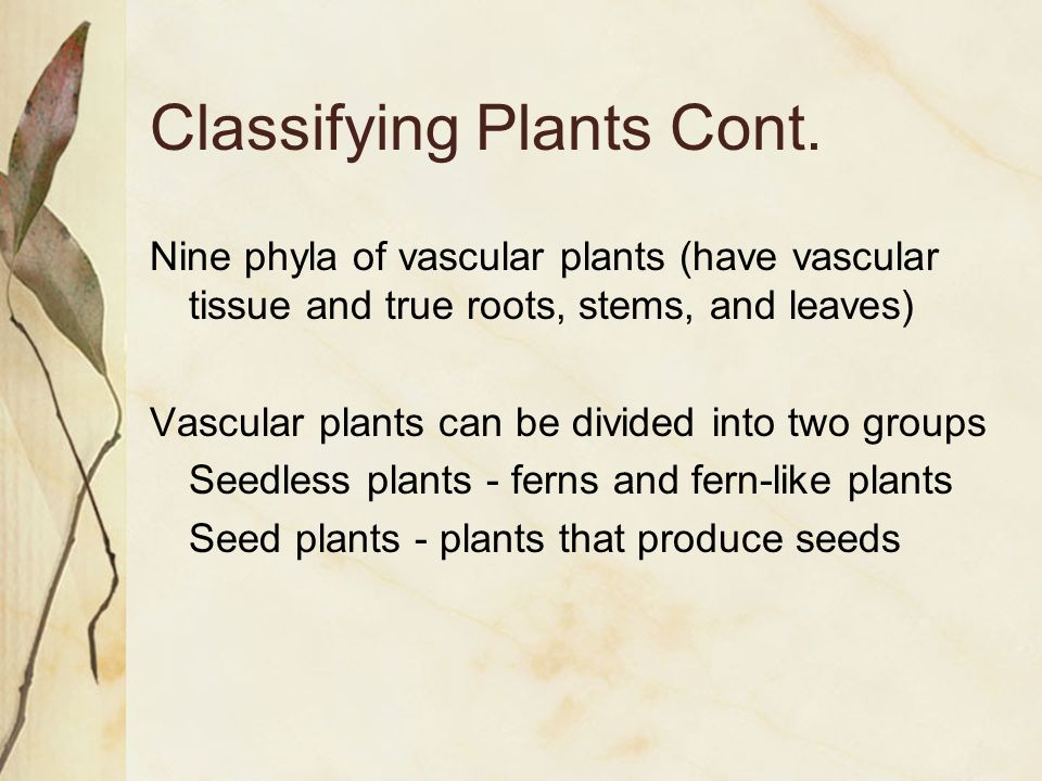 Classifying Plants Cont.