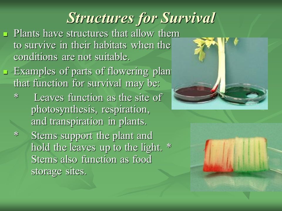 Structures for Survival Plants have structures that allow them to survive in their habitats when the conditions are not suitable.