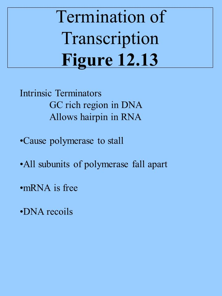 Termination of Transcription Figure Intrinsic Terminators GC rich region in DNA Allows hairpin in RNA Cause polymerase to stall All subunits of polymerase fall apart mRNA is free DNA recoils