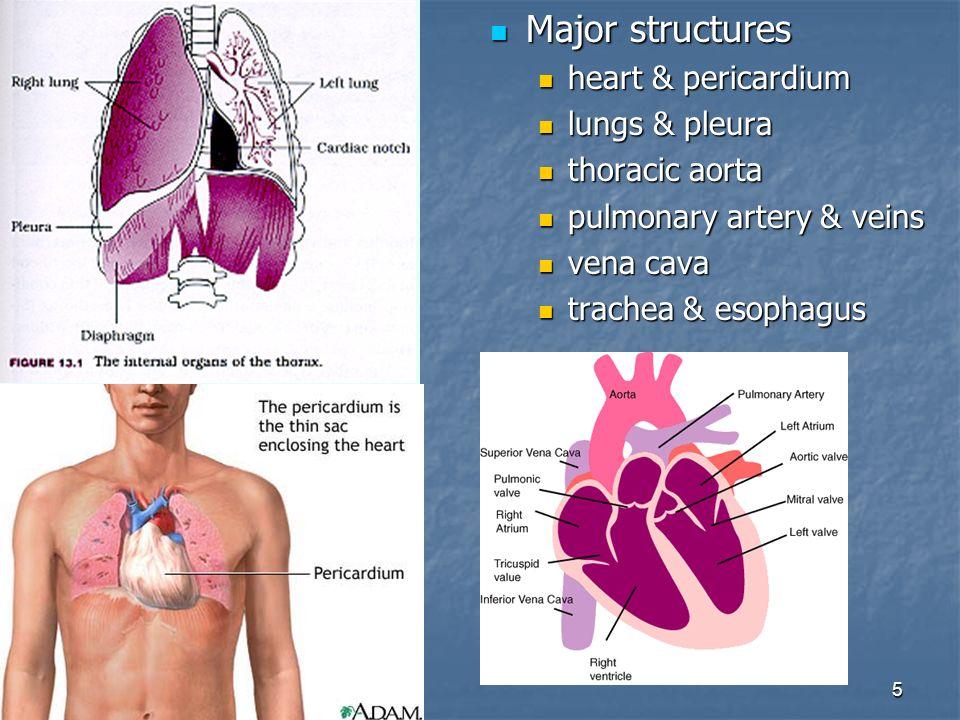 Anatomy of the thoracic cavity