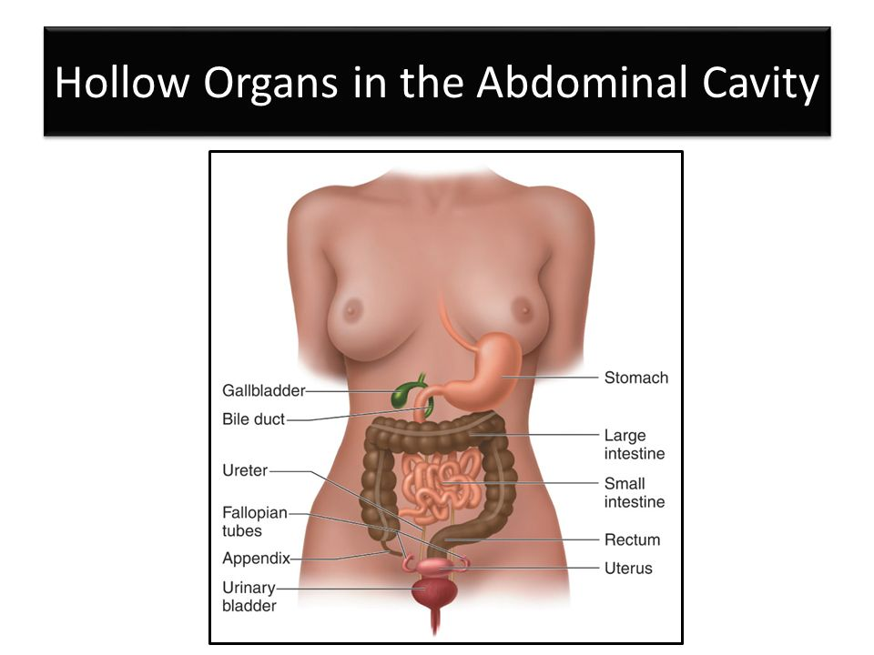 Abdomen And Genitalia Injuries Chapter 28 Hollow Organs In The