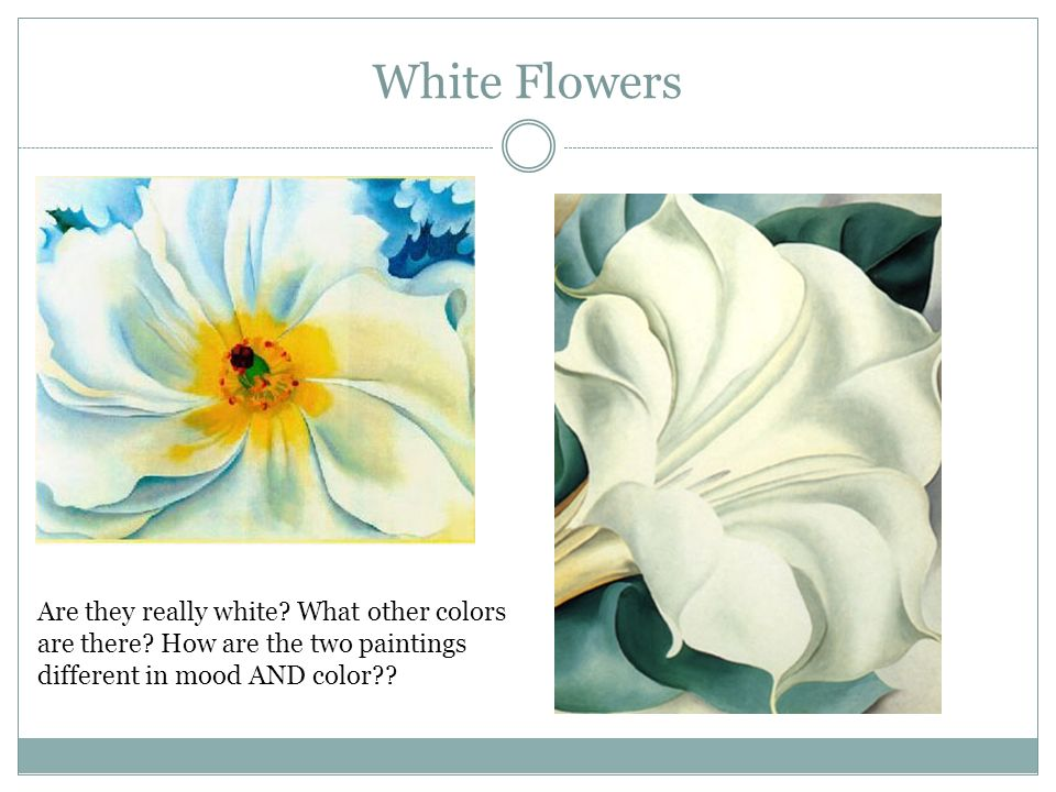 Georgia o keeffe white flower flowers healthy georgia o keeffe white flower flowers healthy modern georgia o keeffe the white flower ponent best evening mightylinksfo