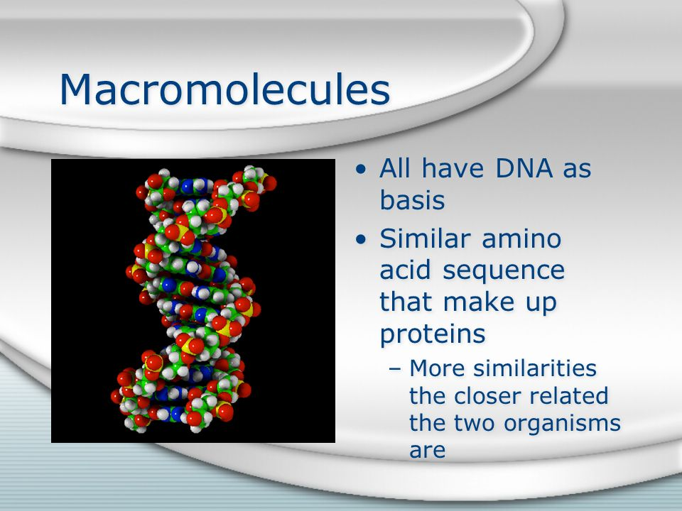Macromolecules All have DNA as basis Similar amino acid sequence that make up proteins –More similarities the closer related the two organisms are