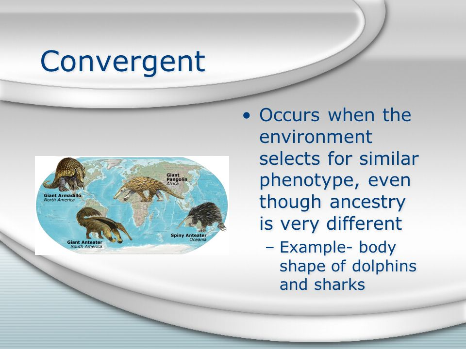 Convergent Occurs when the environment selects for similar phenotype, even though ancestry is very different –Example- body shape of dolphins and sharks