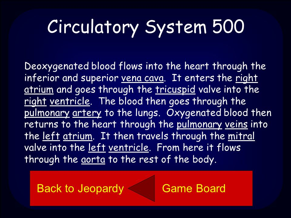 Circulatory System 500 Describe how blood moves through the circulatory system.