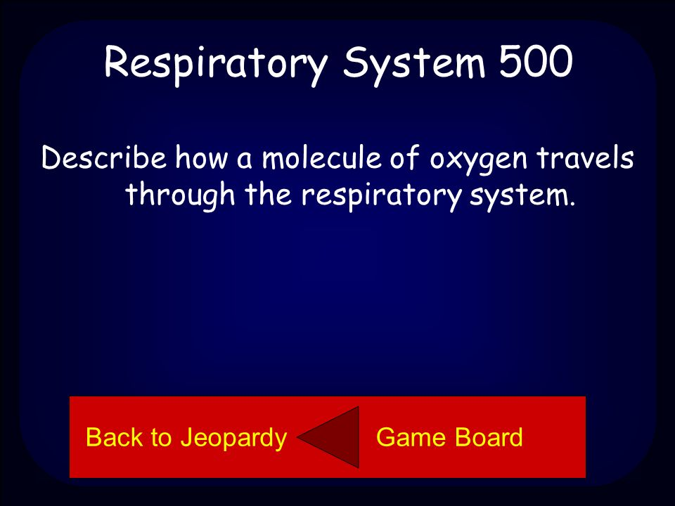 Respiratory System 400 The diaphragm is the muscle below the lungs that helps a person inhale and exhale.