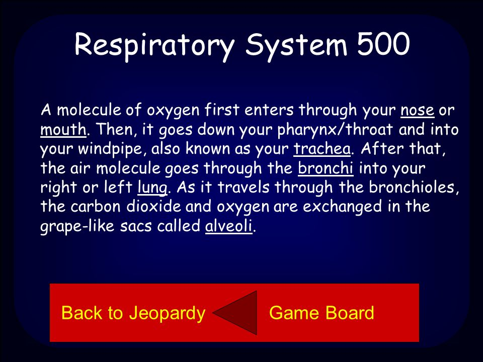 Respiratory System 500 Describe how a molecule of oxygen travels through the respiratory system.