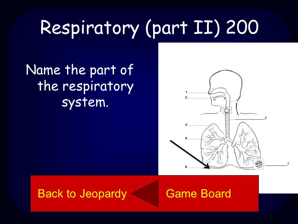 Respiratory (part II) 100 Trachea Back to Jeopardy Game Board