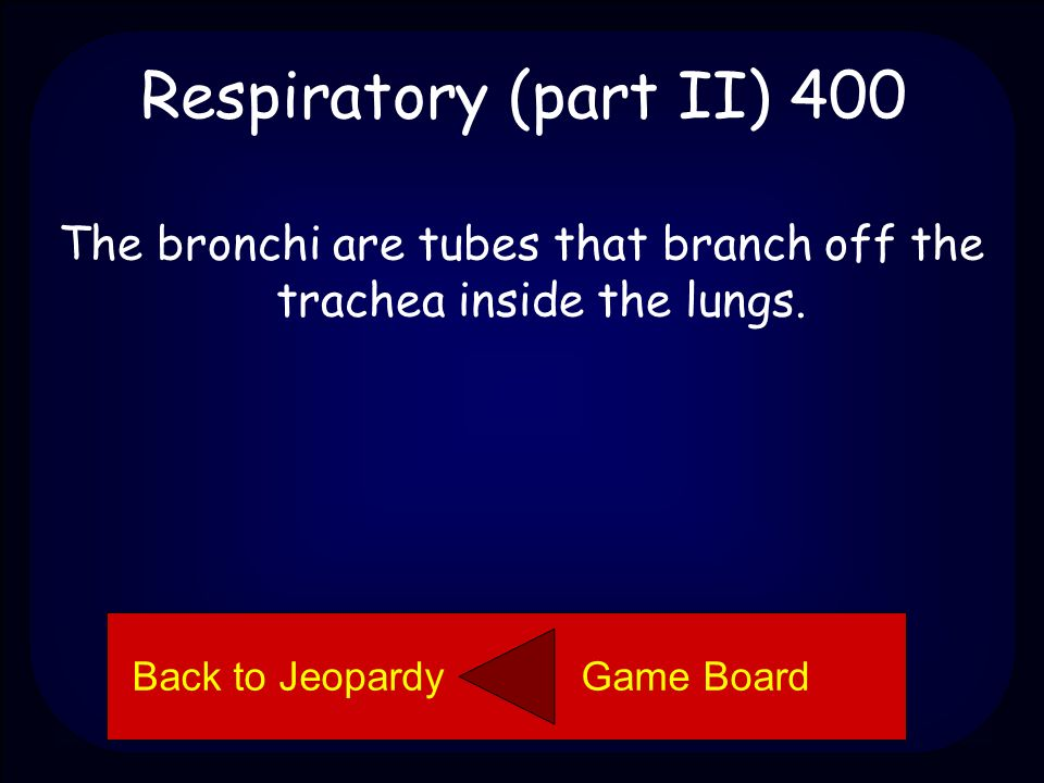 Respiratory (part II) 400 Explain what the bronchi are. Back to Jeopardy Game Board