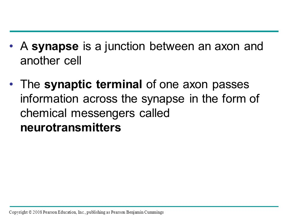 Copyright © 2008 Pearson Education, Inc., publishing as Pearson Benjamin Cummings A synapse is a junction between an axon and another cell The synaptic terminal of one axon passes information across the synapse in the form of chemical messengers called neurotransmitters