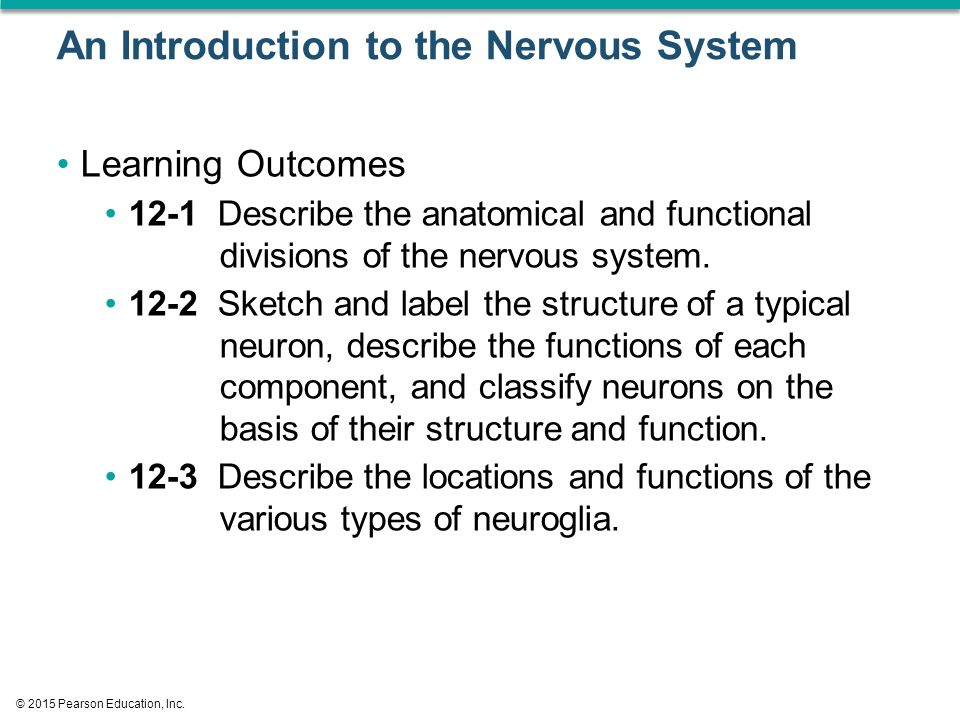 An Introduction to the Nervous System Learning Outcomes 12-1 Describe the anatomical and functional divisions of the nervous system.