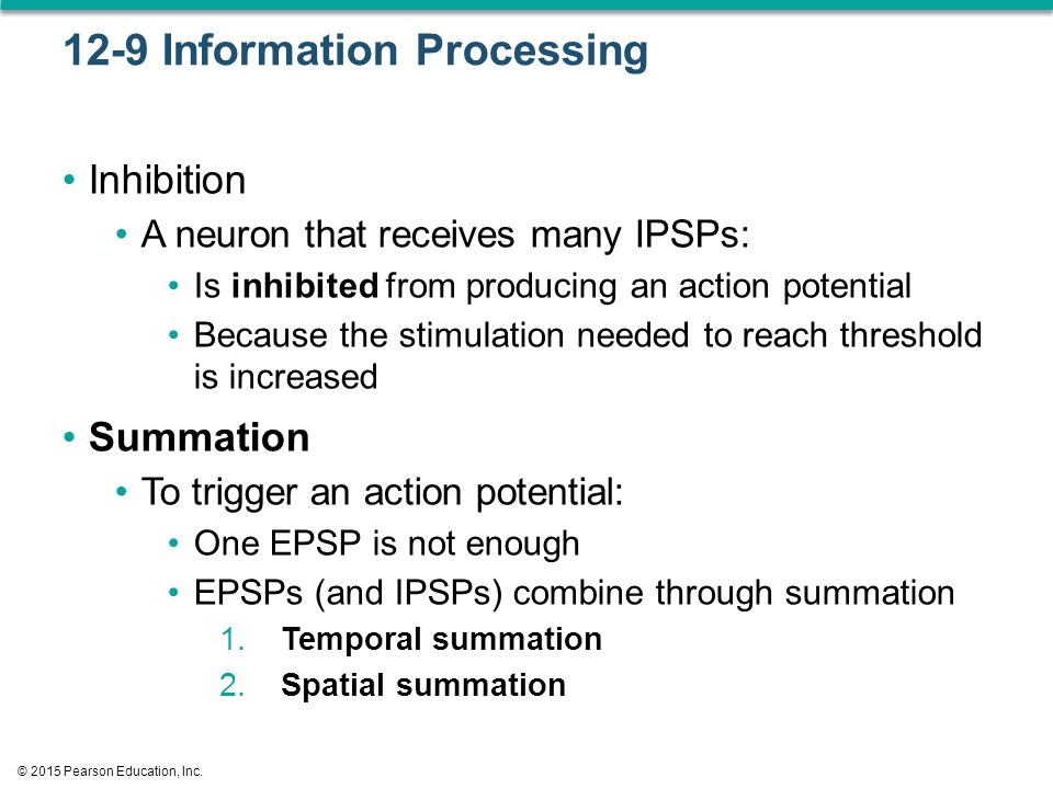 12-9 Information Processing Inhibition A neuron that receives many IPSPs: Is inhibited from producing an action potential Because the stimulation needed to reach threshold is increased Summation To trigger an action potential: One EPSP is not enough EPSPs (and IPSPs) combine through summation 1.