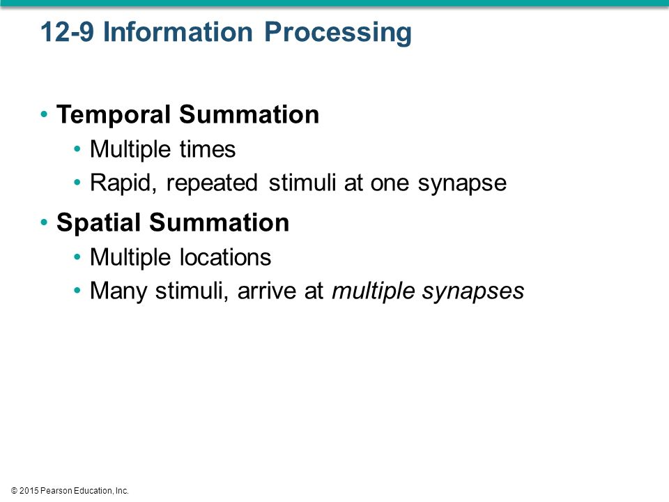 12-9 Information Processing Temporal Summation Multiple times Rapid, repeated stimuli at one synapse Spatial Summation Multiple locations Many stimuli, arrive at multiple synapses © 2015 Pearson Education, Inc.