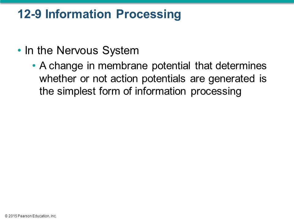 12-9 Information Processing In the Nervous System A change in membrane potential that determines whether or not action potentials are generated is the simplest form of information processing © 2015 Pearson Education, Inc.