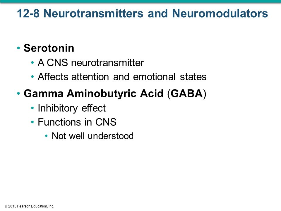 12-8 Neurotransmitters and Neuromodulators Serotonin A CNS neurotransmitter Affects attention and emotional states Gamma Aminobutyric Acid (GABA) Inhibitory effect Functions in CNS Not well understood © 2015 Pearson Education, Inc.