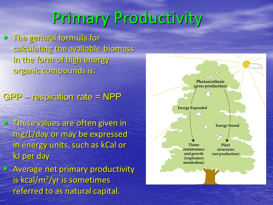 Primary Productivity The general formula for calculating the available biomass in the form of high energy organic compounds is: The general formula for calculating the available biomass in the form of high energy organic compounds is: GPP – respiration rate = NPP These values are often given in mg/L/day or may be expressed in energy units, such as kCal or kJ per day These values are often given in mg/L/day or may be expressed in energy units, such as kCal or kJ per day Average net primary productivity is kcal/m 2 /yr is sometimes referred to as natural capital.