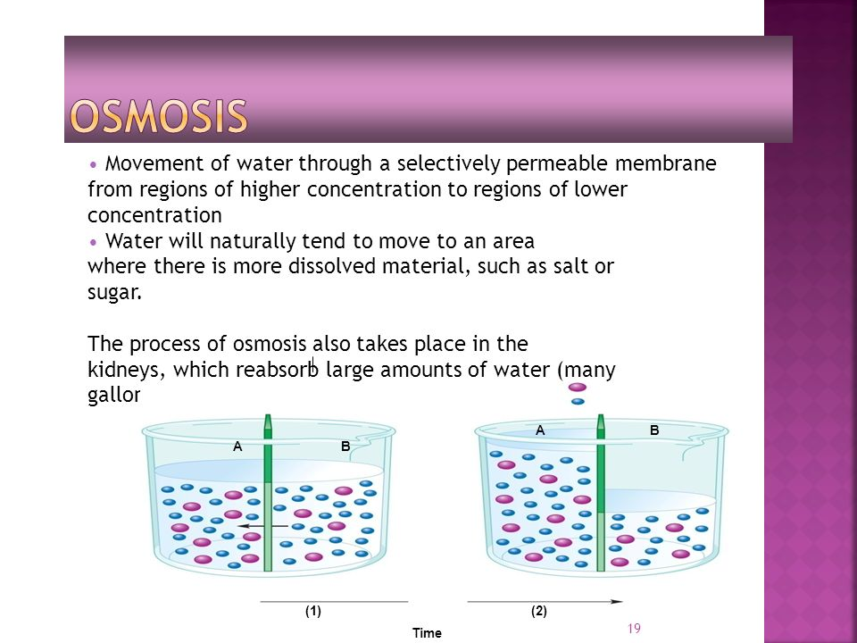 19 Movement of water through a selectively permeable membrane from regions of higher concentration to regions of lower concentration Water will naturally tend to move to an area where there is more dissolved material, such as salt or sugar.