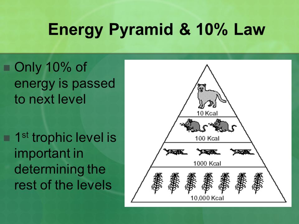 Energy Pyramid & 10% Law Only 10% of energy is passed to next level 1 st trophic level is important in determining the rest of the levels