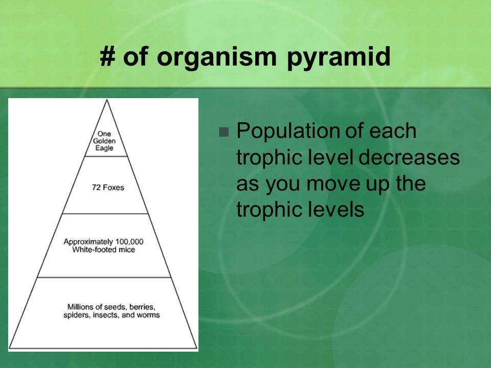 # of organism pyramid Population of each trophic level decreases as you move up the trophic levels