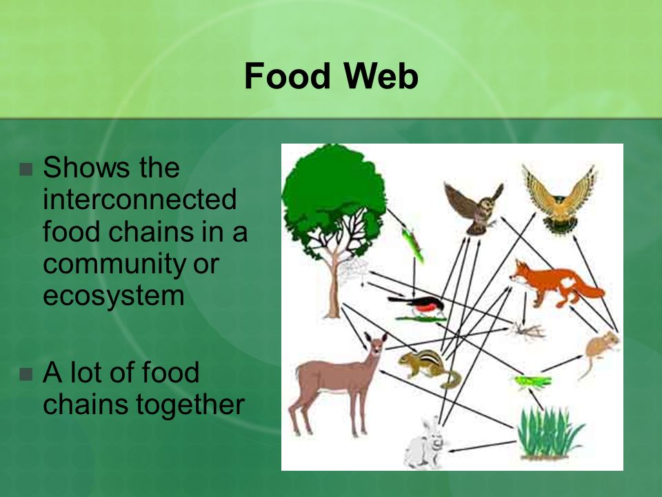 Food Web Shows the interconnected food chains in a community or ecosystem A lot of food chains together