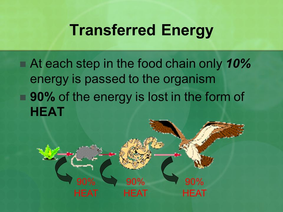 Transferred Energy At each step in the food chain only 10% energy is passed to the organism 90% of the energy is lost in the form of HEAT 90% HEAT 90% HEAT 90% HEAT