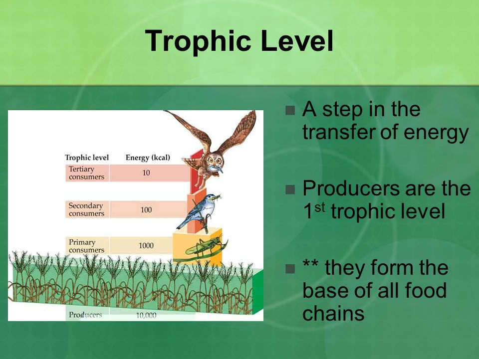 Trophic Level A step in the transfer of energy Producers are the 1 st trophic level ** they form the base of all food chains