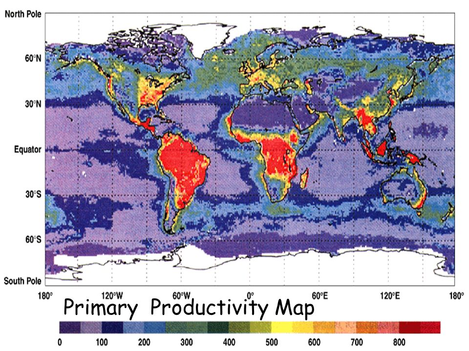 Primary Productivity Map