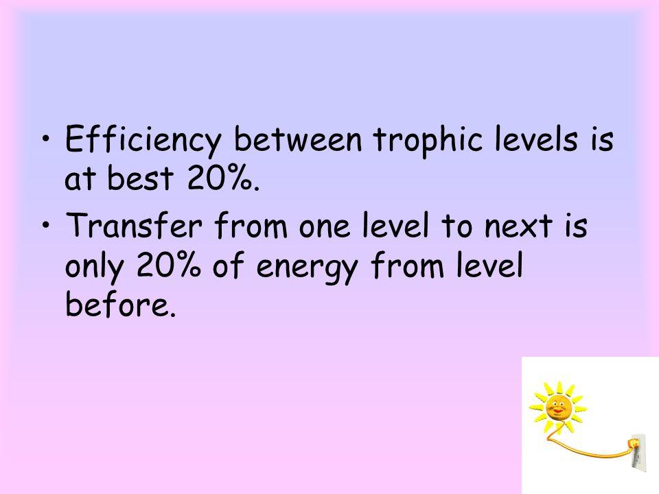 Efficiency between trophic levels is at best 20%.