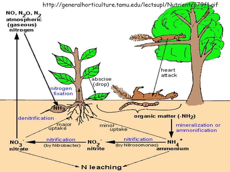 http://generalhorticulture.tamu.edu/lectsupl/Nutrient/p79f1.gif