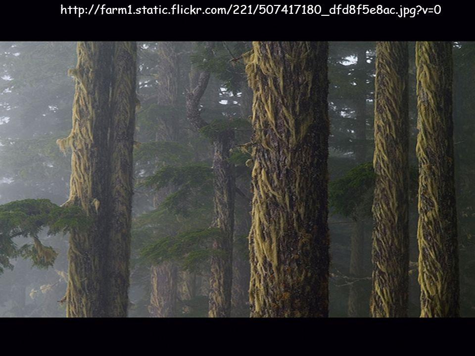 http://farm1.static.flickr.com/221/507417180_dfd8f5e8ac.jpg?v=0