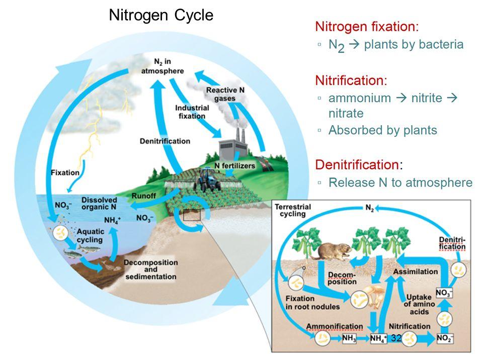 32 Nitrogen Cycle