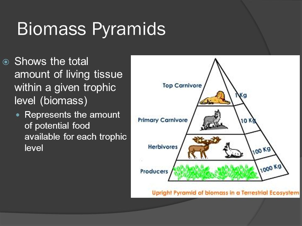 Biomass Pyramids  Shows the total amount of living tissue within a given trophic level (biomass) Represents the amount of potential food available for each trophic level