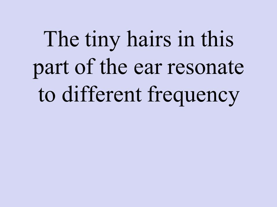 The tiny hairs in this part of the ear resonate to different frequency