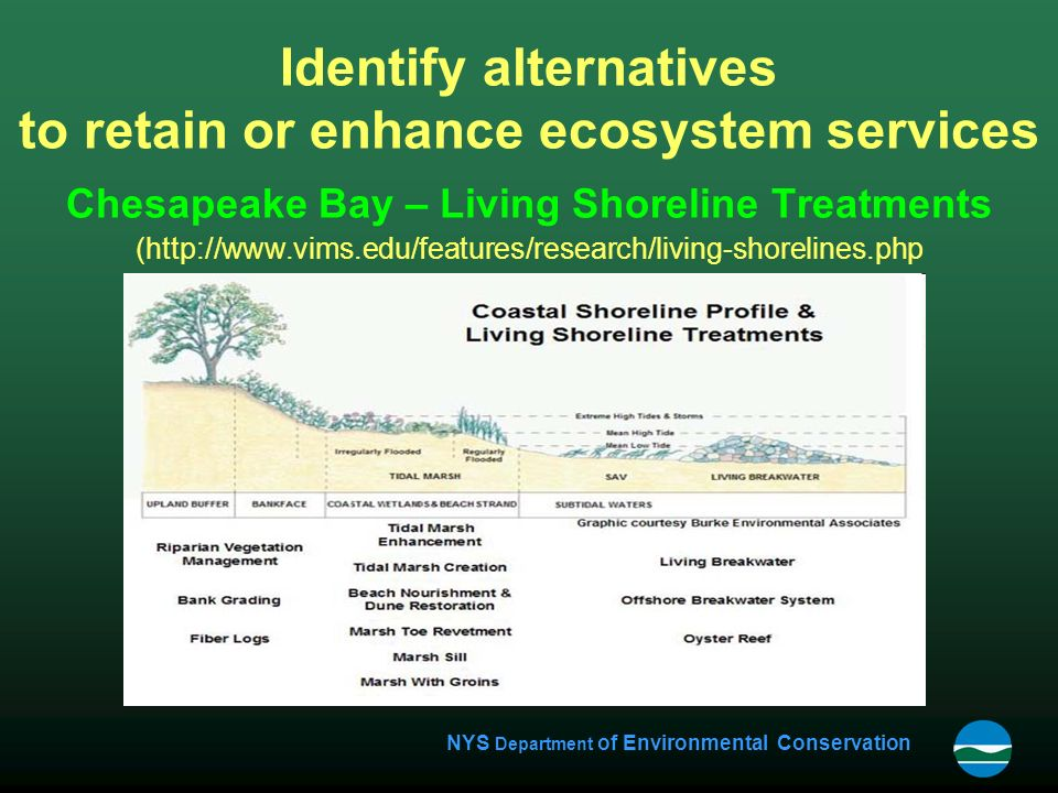NYS Department of Environmental Conservation Identify alternatives to retain or enhance ecosystem services Chesapeake Bay – Living Shoreline Treatments (http://www.vims.edu/features/research/living-shorelines.php