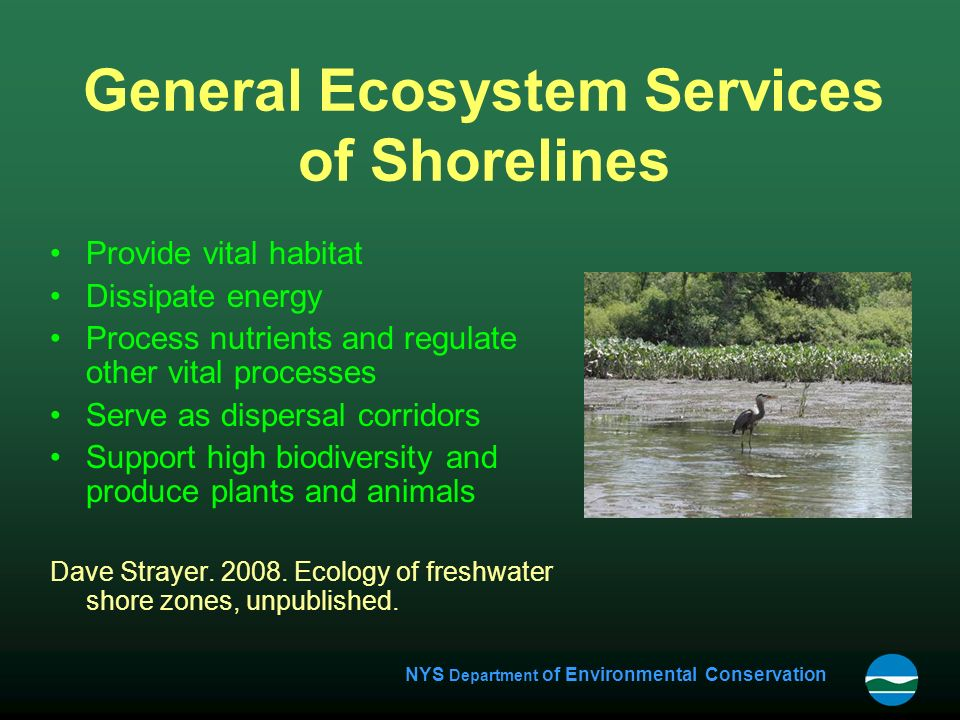 NYS Department of Environmental Conservation General Ecosystem Services of Shorelines Provide vital habitat Dissipate energy Process nutrients and regulate other vital processes Serve as dispersal corridors Support high biodiversity and produce plants and animals Dave Strayer.