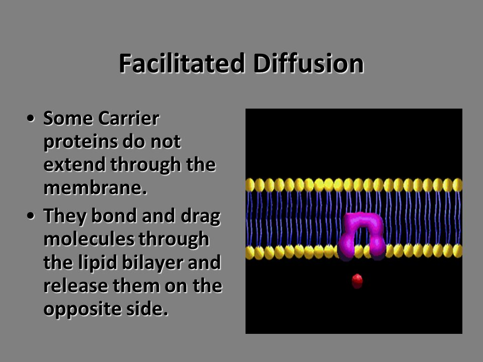 Facilitated Diffusion Some Carrier proteins do not extend through the membrane.Some Carrier proteins do not extend through the membrane.