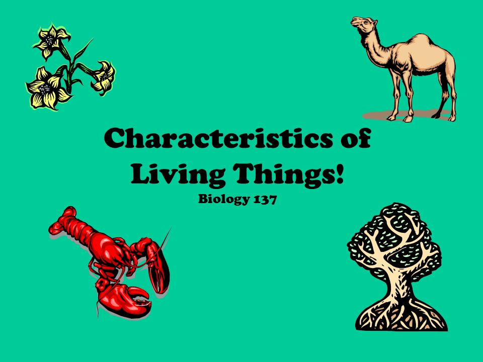 Characteristics of Living Things! Biology 137