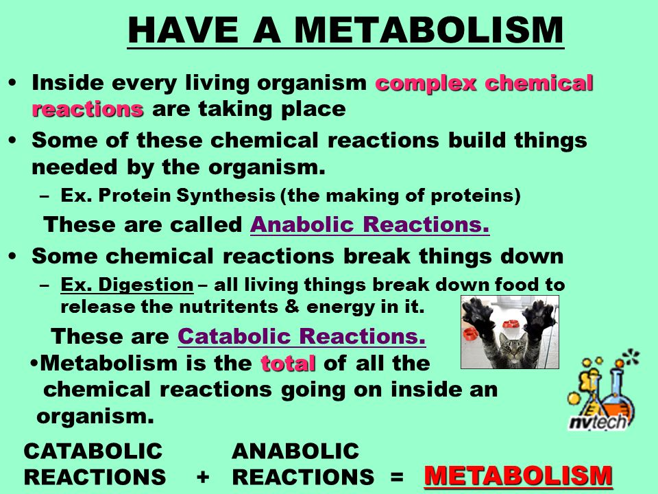 HAVE A METABOLISM complex chemical reactionsInside every living organism complex chemical reactions are taking place Some