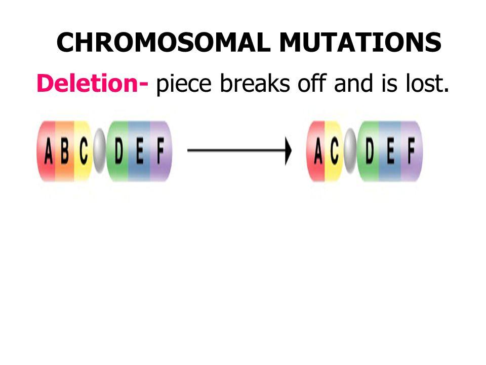 Klinefelter's Syndrome: 47XXY