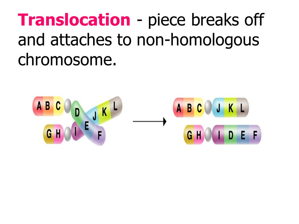 Duplication - piece breaks off and attaches to a homologous chromosome