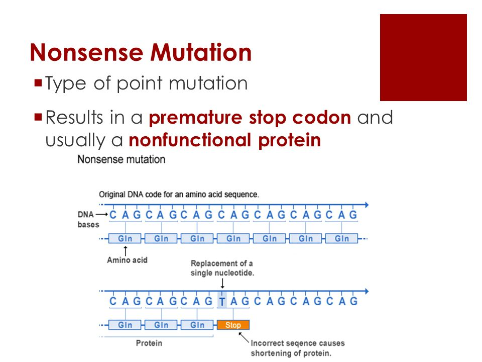Nonsense Mutation  Type of point mutation  Results in a premature stop codon and usually a nonfunctional protein