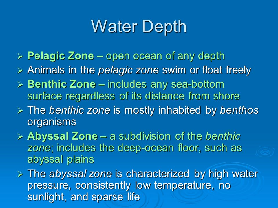 Water Depth  Pelagic Zone – open ocean of any depth  Animals in the pelagic zone swim or float freely  Benthic Zone – includes any sea-bottom surface regardless of its distance from shore  The benthic zone is mostly inhabited by benthos organisms  Abyssal Zone – a subdivision of the benthic zone; includes the deep-ocean floor, such as abyssal plains  The abyssal zone is characterized by high water pressure, consistently low temperature, no sunlight, and sparse life