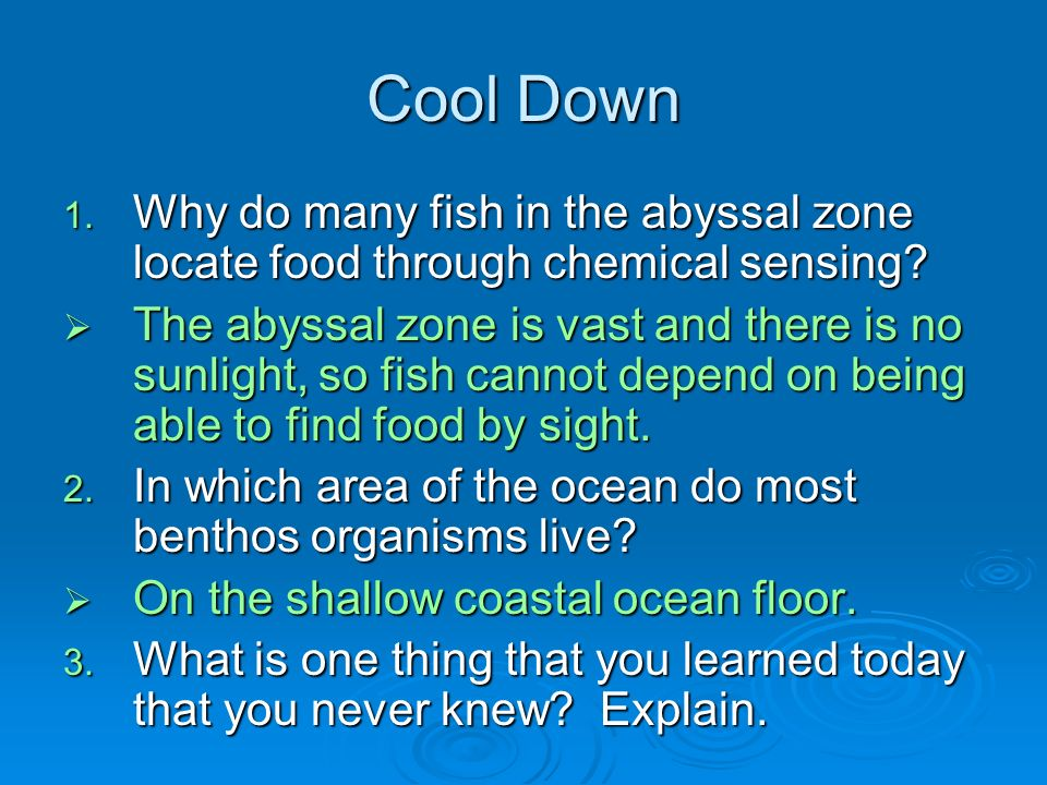 Cool Down 1. Why do many fish in the abyssal zone locate food through chemical sensing.