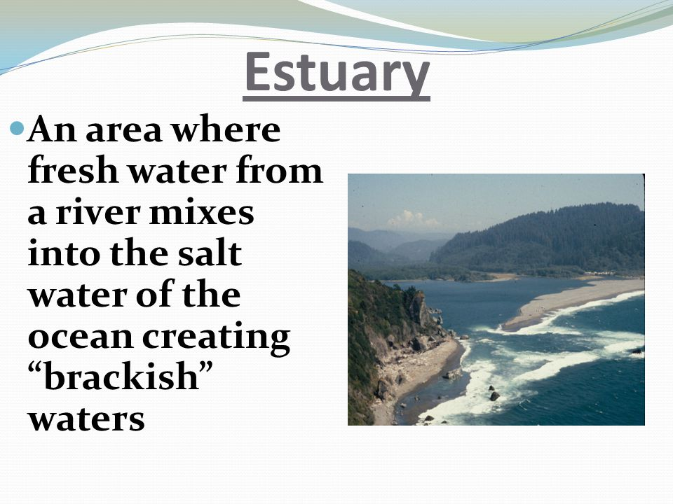 Estuary An area where fresh water from a river mixes into the salt water of the ocean creating brackish waters